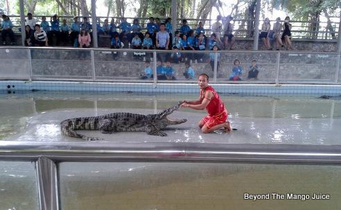 Crocodile-show-Pattaya