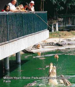 Feeding-crocodiles-Pattaya-Crocodile-Farm-001