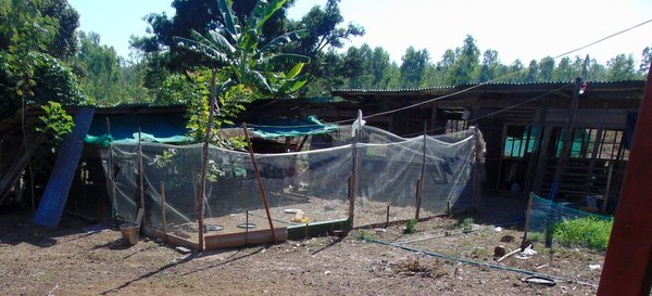 chicken farm thailand
